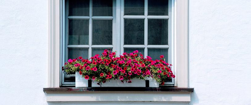 Timber Window Prices