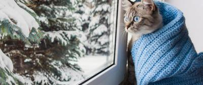 Best Time to Install Windows: Should You Replace Windows Before Winter?